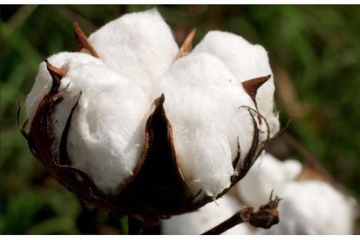 Brumes Plantes et Parfums